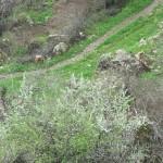 Kurdistan 10.4.2012_9