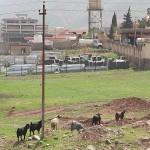 Kurdistan 9.4.2012_28